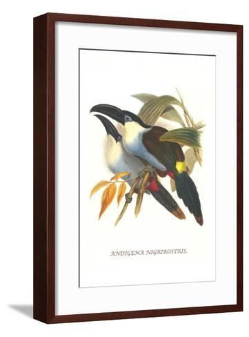 Blsck Billed Mountain Toucan-John Gould-Framed Art Print
