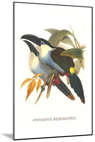 Blsck Billed Mountain Toucan-John Gould-Mounted Art Print