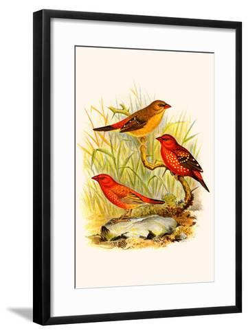 Common Amaduvade and African Fire Finch-F^w^ Frohawk-Framed Art Print
