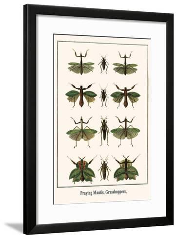 Praying Mantis, Grasshoppers,-Albertus Seba-Framed Art Print