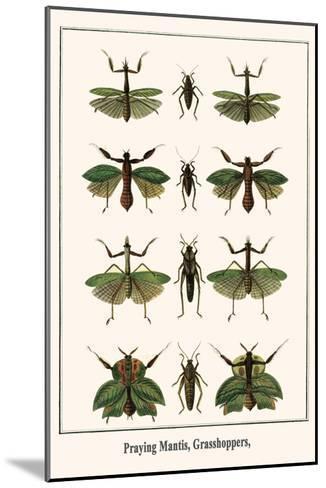 Praying Mantis, Grasshoppers,-Albertus Seba-Mounted Art Print