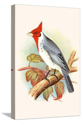 Red Crested Cardinal-F^w^ Frohawk-Stretched Canvas Print