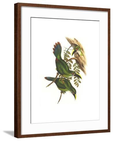 White Throated Toucanet-John Gould-Framed Art Print