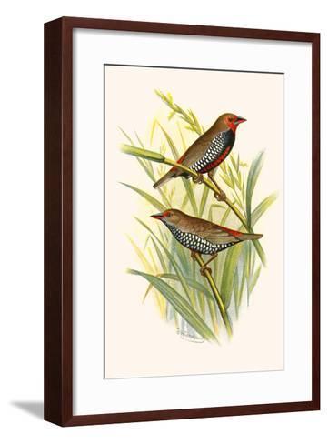 Painted Finch-F^w^ Frohawk-Framed Art Print