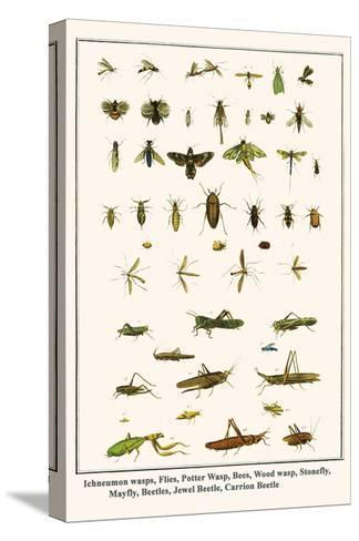 Ichneumon Wasps, Flies, Potter Wasp, Bees, Wood Wasp, Stonefly, Mayfly, Beetles, Jewel Beetle, etc.-Albertus Seba-Stretched Canvas Print