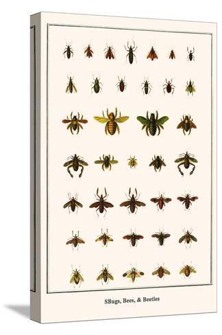 Bugs, Bees, and Beetles-Albertus Seba-Stretched Canvas Print