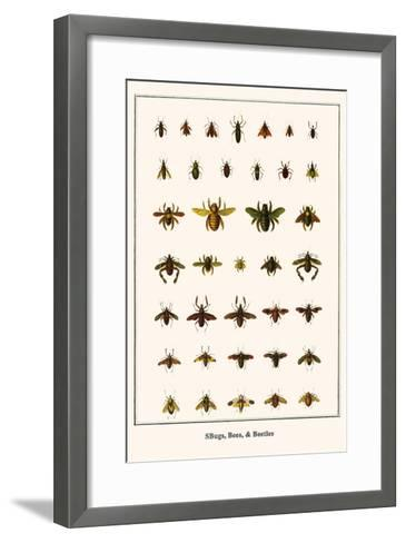 Bugs, Bees, and Beetles-Albertus Seba-Framed Art Print