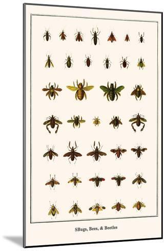 Bugs, Bees, and Beetles-Albertus Seba-Mounted Art Print