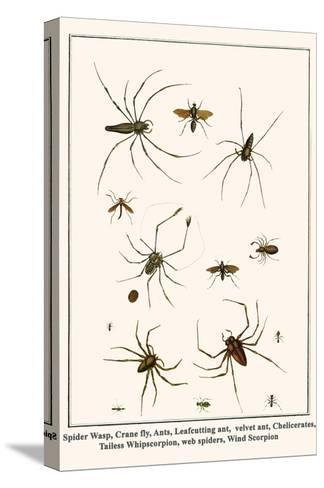 Spider Wasp, Crane Fly, Ants, Leafcutting Ant, Velvet Ant, Chelicerates, Tailess Whipscorpion, etc.-Albertus Seba-Stretched Canvas Print