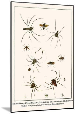Spider Wasp, Crane Fly, Ants, Leafcutting Ant, Velvet Ant, Chelicerates, Tailess Whipscorpion, etc.-Albertus Seba-Mounted Art Print