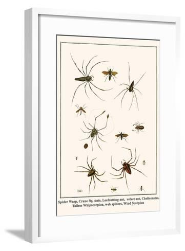 Spider Wasp, Crane Fly, Ants, Leafcutting Ant, Velvet Ant, Chelicerates, Tailess Whipscorpion, etc.-Albertus Seba-Framed Art Print