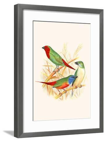 Parrot Finch-F^w^ Frohawk-Framed Art Print
