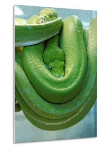Pets Special Snakes-Mark Gilliland-Metal Print