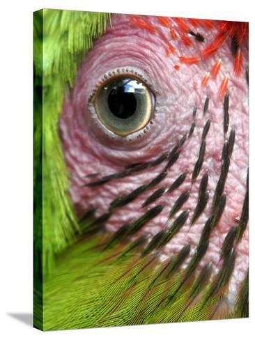 APTOPIX Nicaragua Animal Rescue-Esteban Felix-Stretched Canvas Print