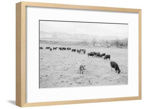 Cattle in South Farm-Ansel Adams-Framed Art Print