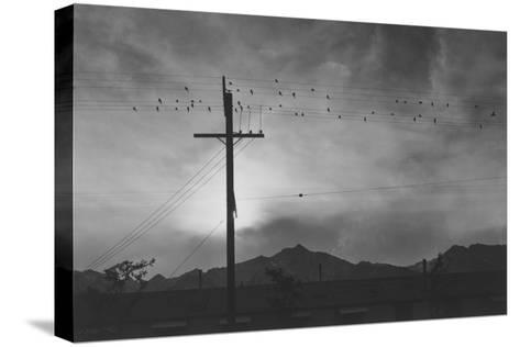 Birds on Wire, Evening-Ansel Adams-Stretched Canvas Print