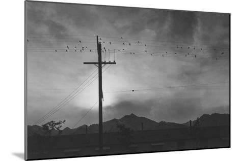 Birds on Wire, Evening-Ansel Adams-Mounted Art Print