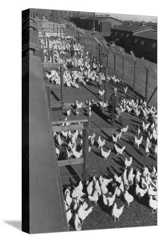 Poultry Farm-Ansel Adams-Stretched Canvas Print