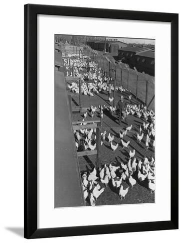 Poultry Farm-Ansel Adams-Framed Art Print