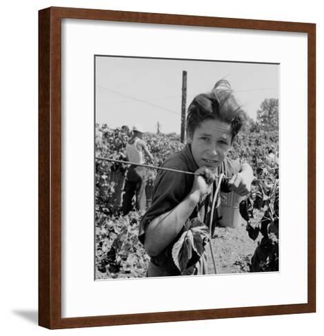 Portrait of a Migratory Boy Picking Hops-Dorothea Lange-Framed Art Print