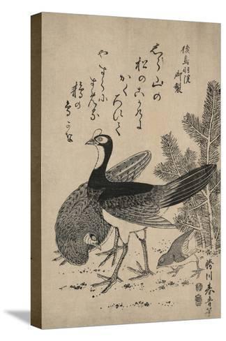 Wildfowl and Pine-Katsukawa Shunsei-Stretched Canvas Print