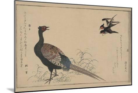 Pheasant--Mounted Art Print