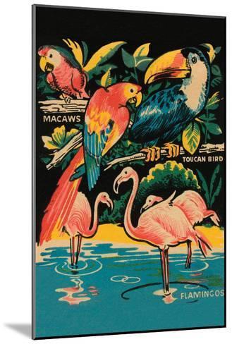 Tropical Hobbyland - Birds--Mounted Art Print