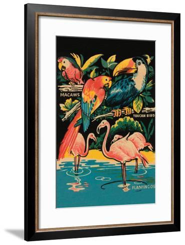 Tropical Hobbyland - Birds--Framed Art Print