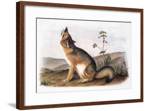 Kit Fox (Vulpes Velox)-John James Audubon-Framed Art Print