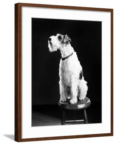 Asta--Framed Art Print