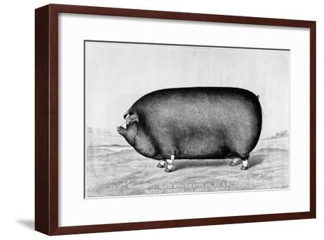 American Pig, 1890--Framed Art Print