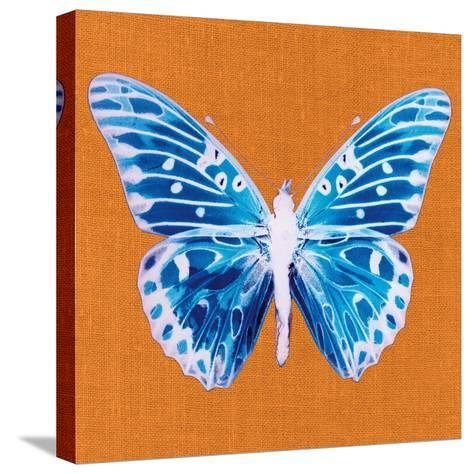Orange Pop Butterfly-Christine Caldwell-Stretched Canvas Print