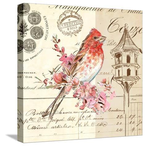 Bird Sketch 1-Chad Barrett-Stretched Canvas Print