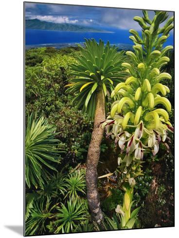 Giant Lobelia, Lobelia Gloria Montis, Lobelia Watershed Preserve, Maui, Hawaii-Frans Lanting-Mounted Photographic Print