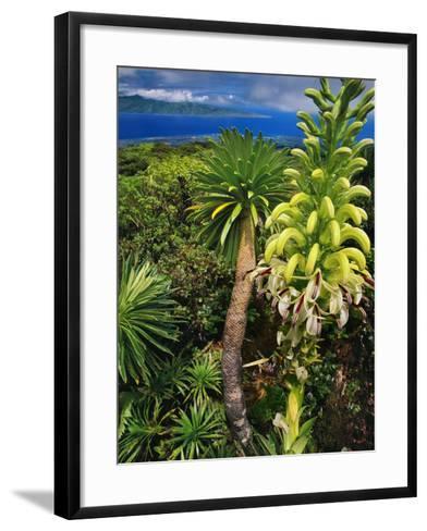 Giant Lobelia, Lobelia Gloria Montis, Lobelia Watershed Preserve, Maui, Hawaii-Frans Lanting-Framed Art Print