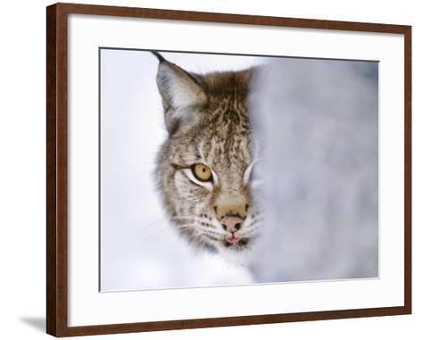 Eurasian Lynx Hiding Behind Tree, Lynx Lynx, Finland-Frans Lanting-Framed Art Print