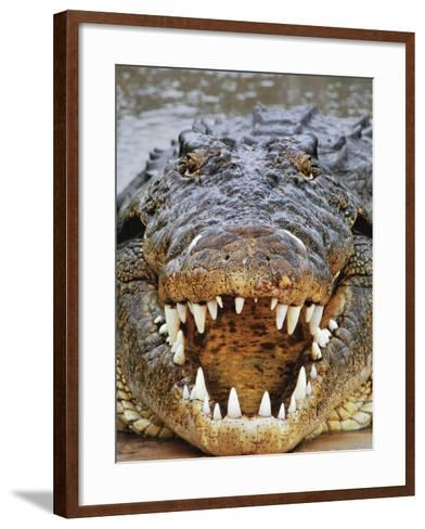 Nile Crocodile, Crocodylus Niloticus, Okavango Delta, Botswana-Frans Lanting-Framed Art Print