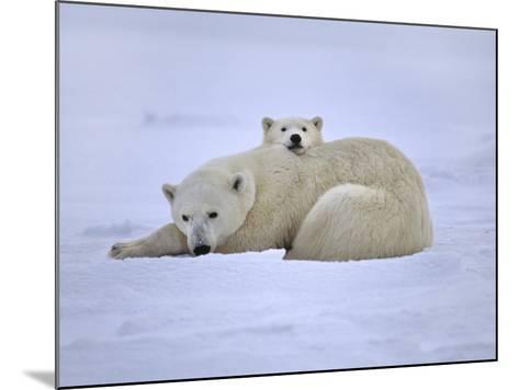 Polar Bear Mother and Cub, Ursus Maritimus, Hudson Bay, Canada-Frans Lanting-Mounted Photographic Print