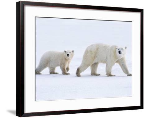 Polar Bear Mother and Cub, Ursus Maritimus, Hudson Bay, Canada-Frans Lanting-Framed Art Print