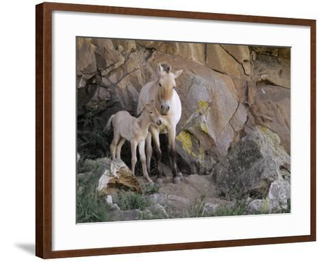 Takhi Mare with Foal, Equus Caballus Przewalskii, Hustain Nuruu National Park, Mongolia-Frans Lanting-Framed Art Print