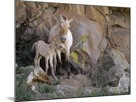 Takhi Mare with Foal, Equus Caballus Przewalskii, Hustain Nuruu National Park, Mongolia-Frans Lanting-Mounted Photographic Print
