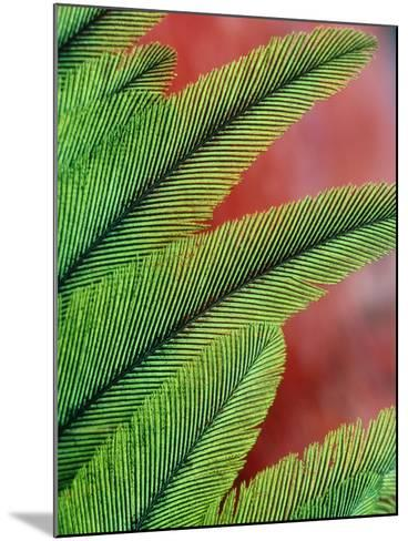 Resplendent Quetzal Feathers, Pharomachrus Mocinno, Costa Rica-Frans Lanting-Mounted Photographic Print