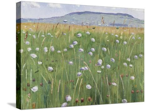 Meadow of Flowers, about 1901-Ferdinand Hodler-Stretched Canvas Print