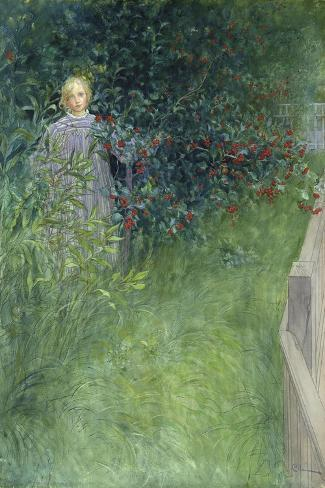 In the Rose Hip Hedge-Carl Larsson-Stretched Canvas Print