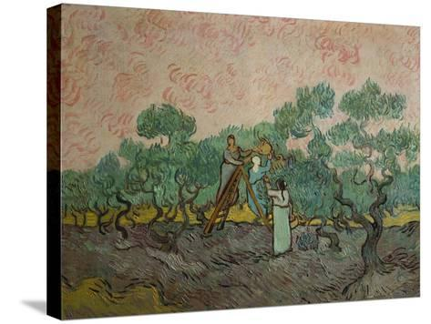 The Olive Pickers, 1889-Vincent van Gogh-Stretched Canvas Print