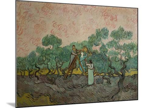 The Olive Pickers, 1889-Vincent van Gogh-Mounted Giclee Print