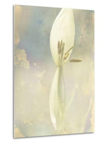 Tulip Fading-Mia Friedrich-Metal Print