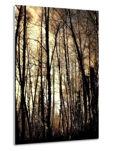 Winter Forest Light-Jody Miller-Metal Print