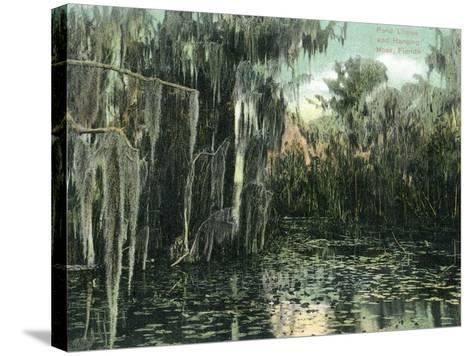 Florida - View of Pond Lilies and Hanging Moss-Lantern Press-Stretched Canvas Print