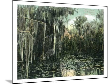 Florida - View of Pond Lilies and Hanging Moss-Lantern Press-Mounted Art Print